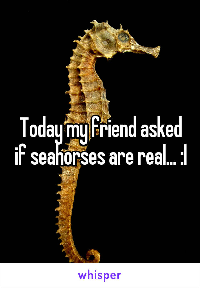Today my friend asked if seahorses are real... :l