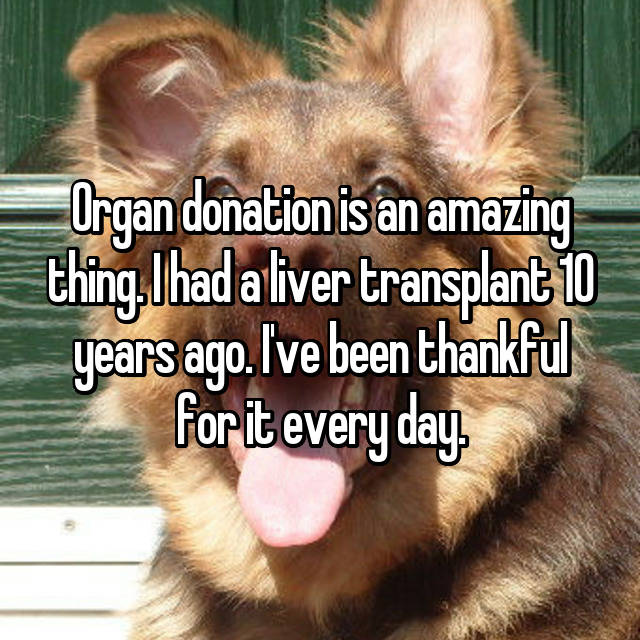 Organ donation is an amazing thing. I had a liver transplant 10 years ago. I've been thankful for it every day.