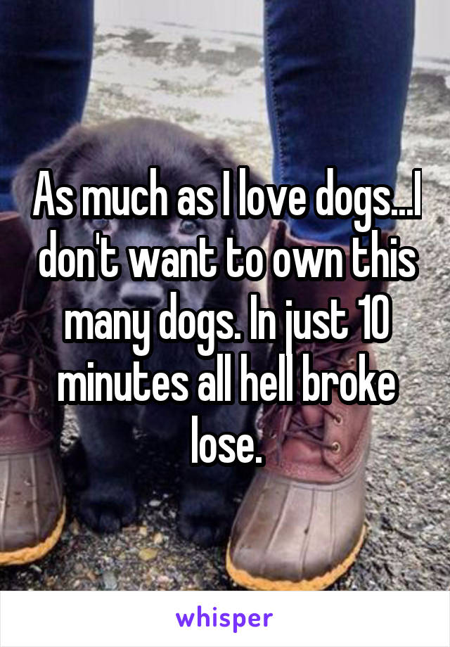 As much as I love dogs...I don't want to own this many dogs. In just 10 minutes all hell broke lose.