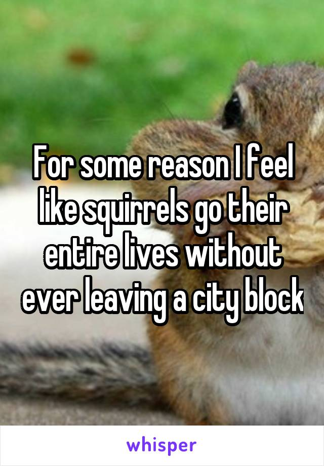 For some reason I feel like squirrels go their entire lives without ever leaving a city block