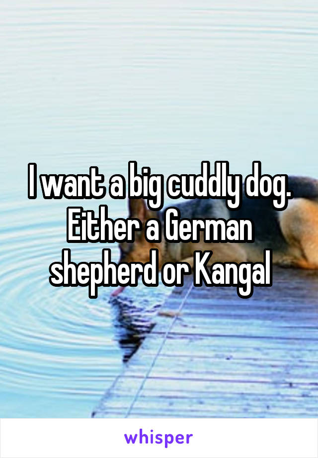 I want a big cuddly dog. Either a German shepherd or Kangal