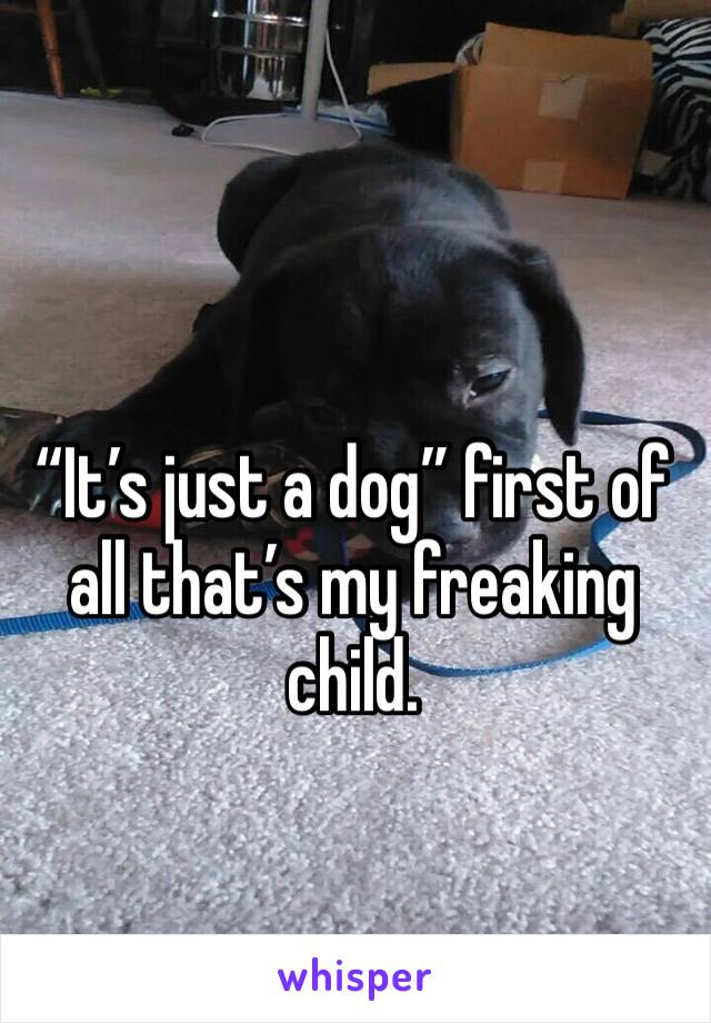 """""""It's just a dog"""" first of all that's my freaking child."""