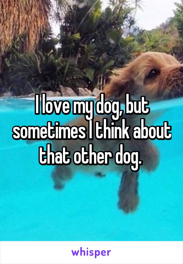 I love my dog, but sometimes I think about that other dog.