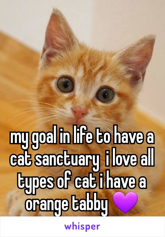 my goal in life to have a cat sanctuary  i love all types of cat i have a orange tabby 💜