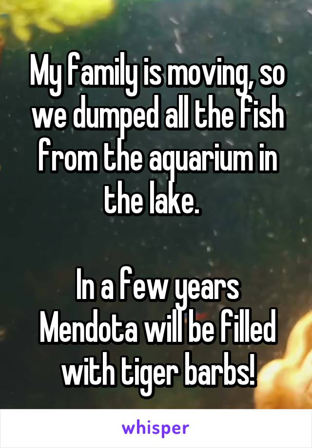 My family is moving, so we dumped all the fish from the aquarium in the lake.    In a few years Mendota will be filled with tiger barbs!