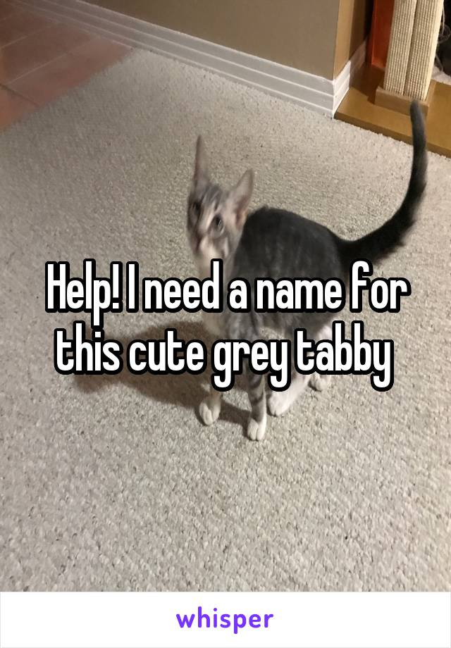Help! I need a name for this cute grey tabby
