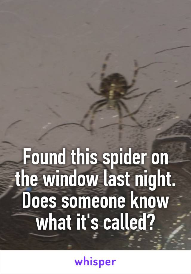 Found this spider on the window last night. Does someone know what it's called?