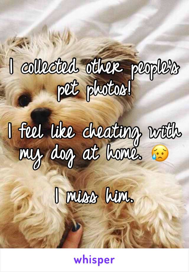 I collected other people's pet photos!  I feel like cheating with my dog at home. 😥  I miss him.