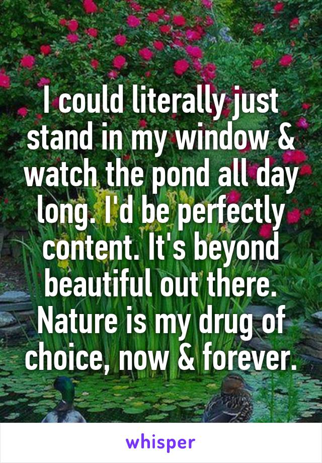 I could literally just stand in my window & watch the pond all day long. I'd be perfectly content. It's beyond beautiful out there. Nature is my drug of choice, now & forever.