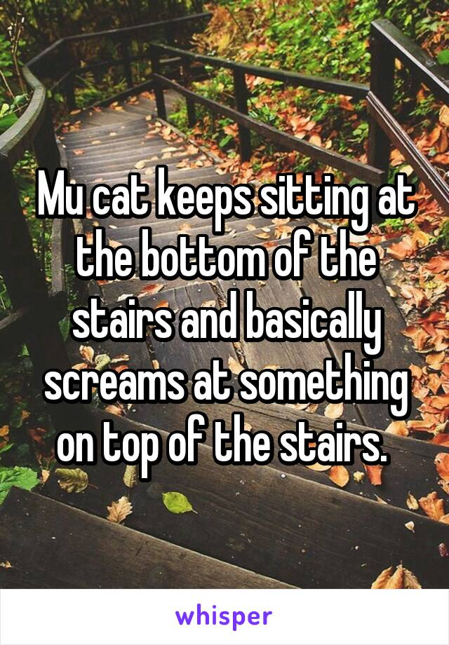 Mu cat keeps sitting at the bottom of the stairs and basically screams at something on top of the stairs.