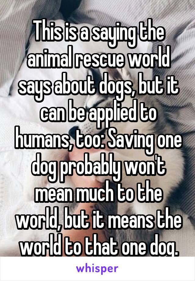This is a saying the animal rescue world says about dogs, but it can be applied to humans, too: Saving one dog probably won't mean much to the world, but it means the world to that one dog.