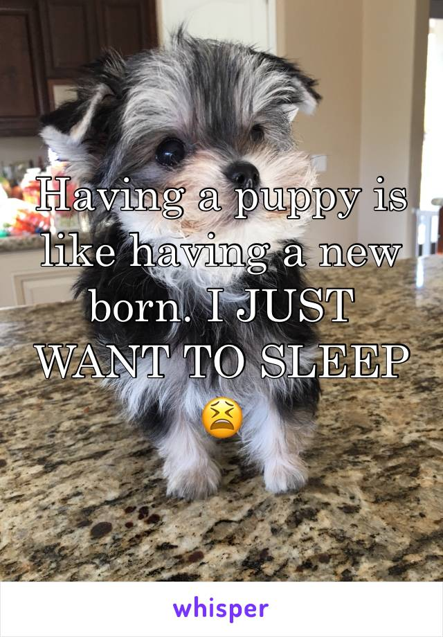 Having a puppy is like having a new born. I JUST WANT TO SLEEP 😫