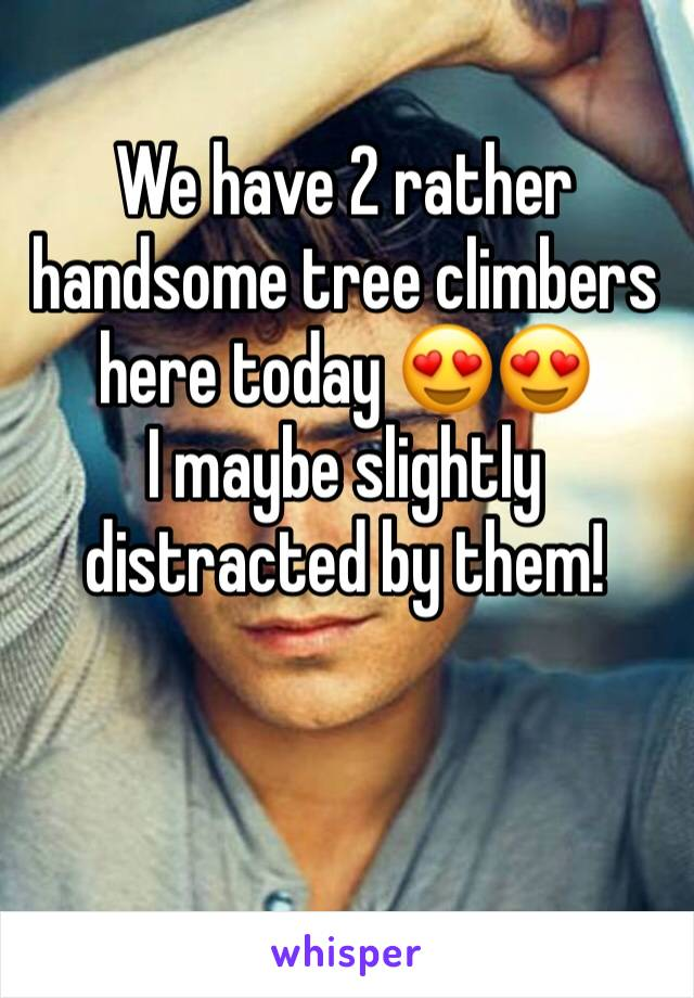 We have 2 rather handsome tree climbers here today 😍😍  I maybe slightly distracted by them!