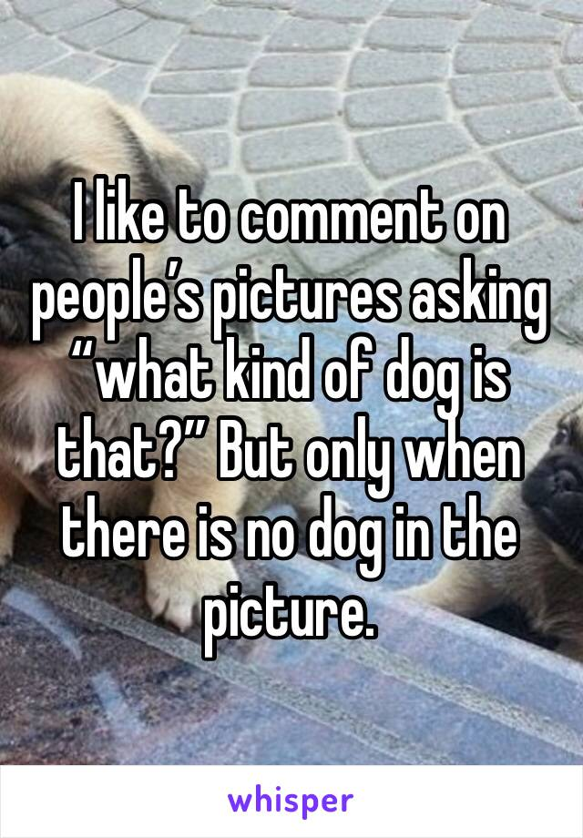 "I like to comment on people's pictures asking ""what kind of dog is that?"" But only when there is no dog in the picture."