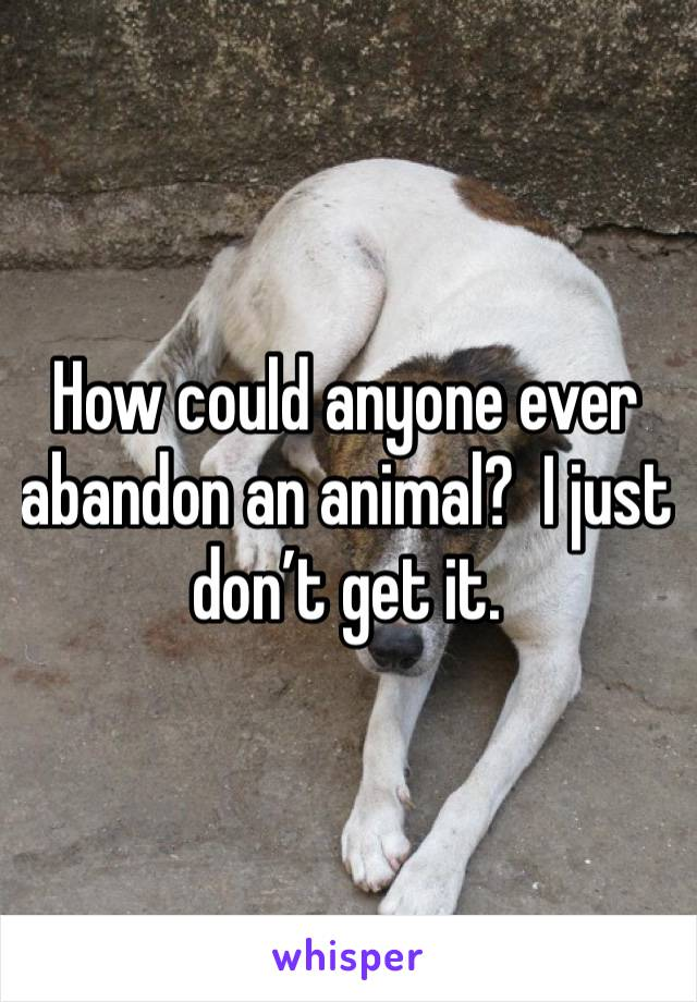 How could anyone ever abandon an animal?  I just don't get it.