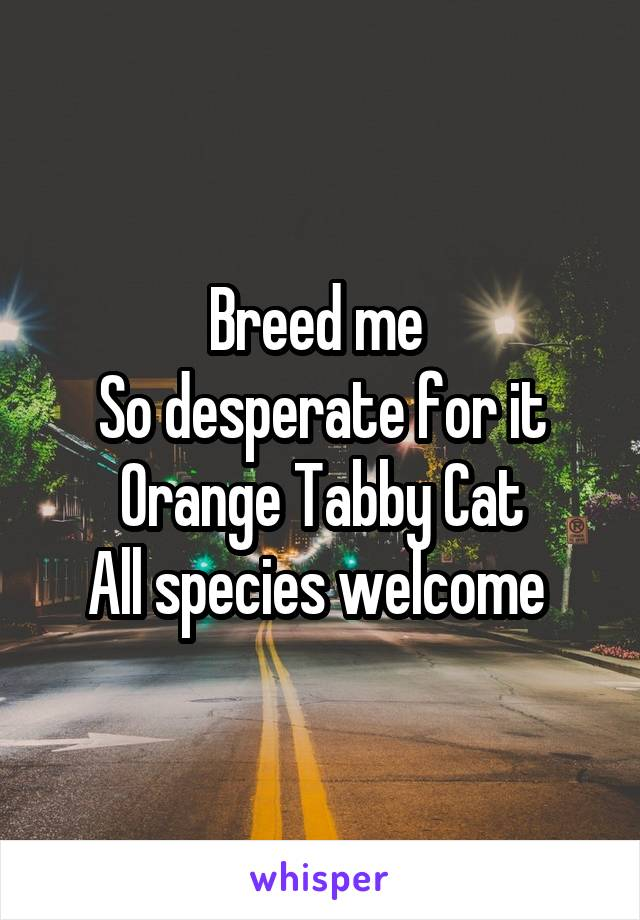Breed me  So desperate for it Orange Tabby Cat All species welcome