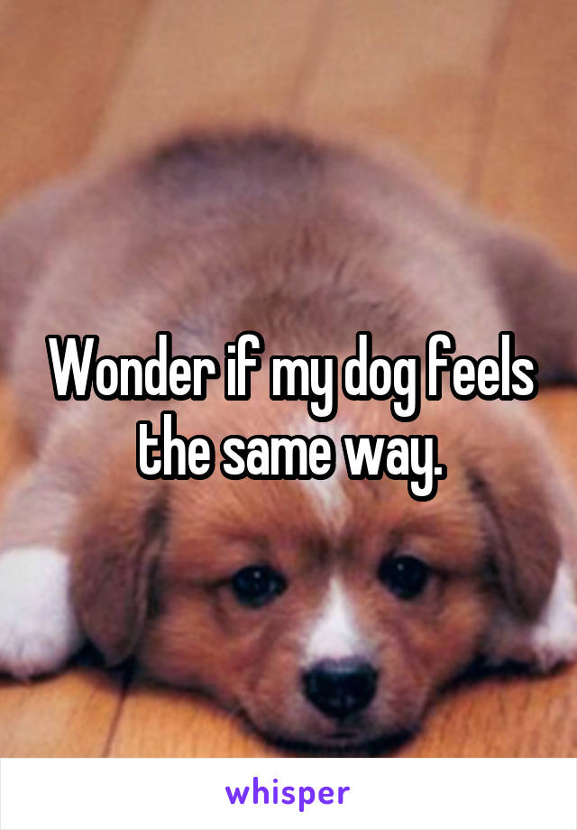 Wonder if my dog feels the same way.
