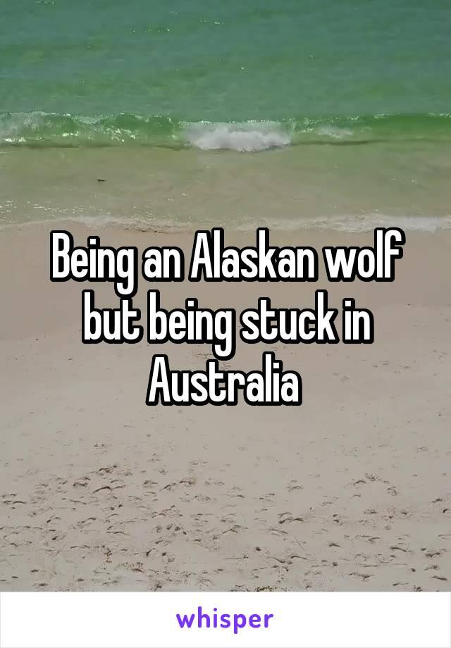 Being an Alaskan wolf but being stuck in Australia