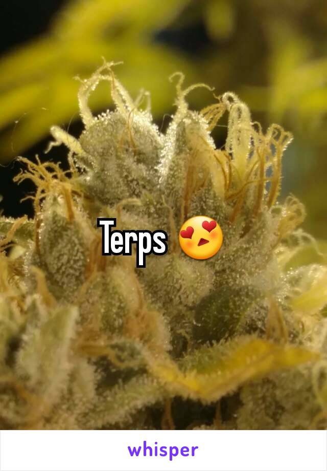 Terps 😍