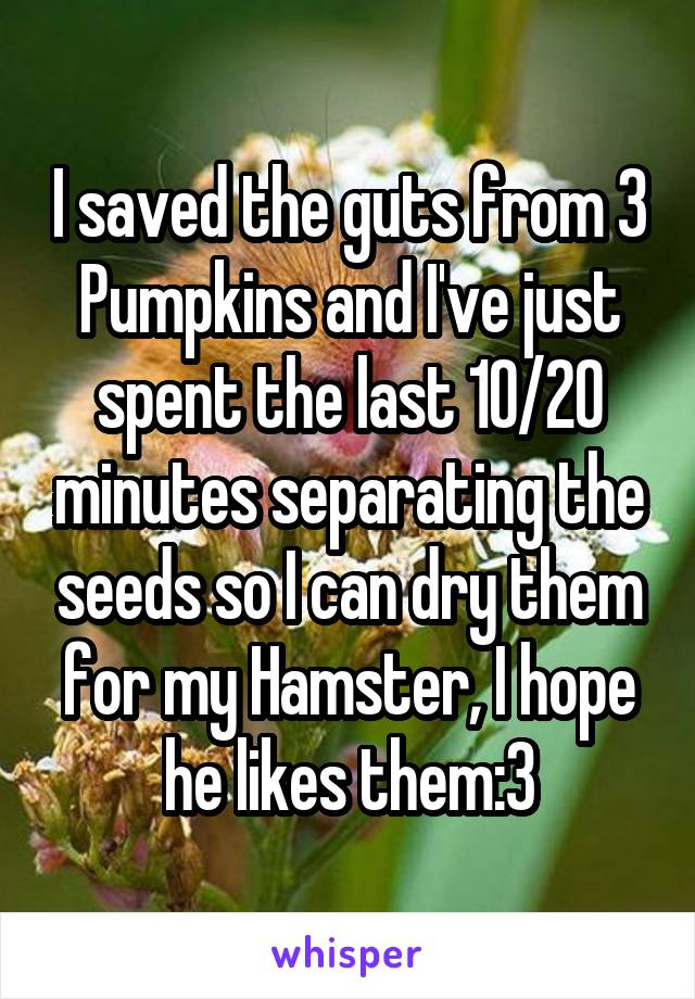 I saved the guts from 3 Pumpkins and I've just spent the last 10/20 minutes separating the seeds so I can dry them for my Hamster, I hope he likes them:3