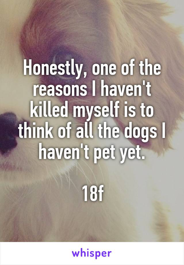 Honestly, one of the reasons I haven't killed myself is to think of all the dogs I haven't pet yet.  18f