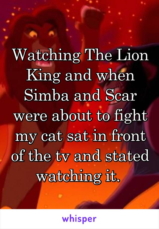 Watching The Lion King and when Simba and Scar were about to fight my cat sat in front of the tv and stated watching it.