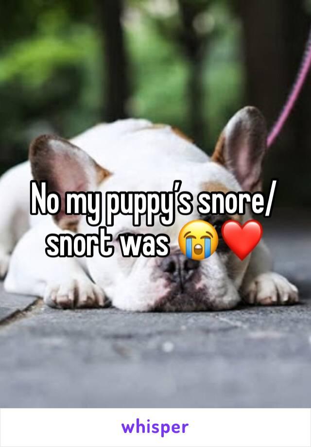 No my puppy's snore/ snort was 😭❤️