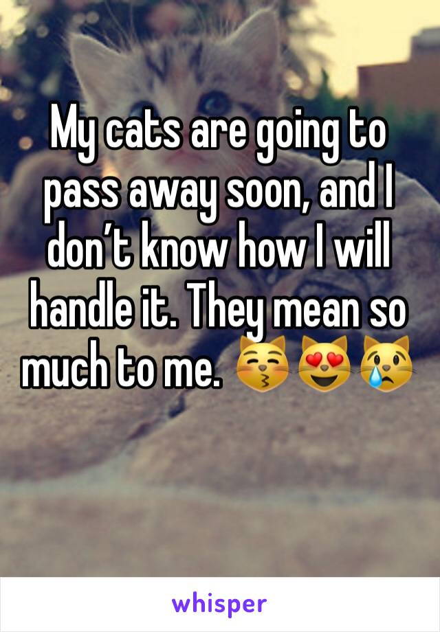 My cats are going to pass away soon, and I don't know how I will handle it. They mean so much to me. 😽😻😿