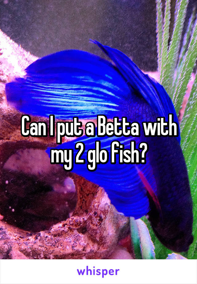 Can I put a Betta with my 2 glo fish?