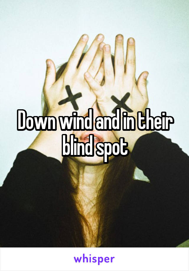 Down wind and in their blind spot
