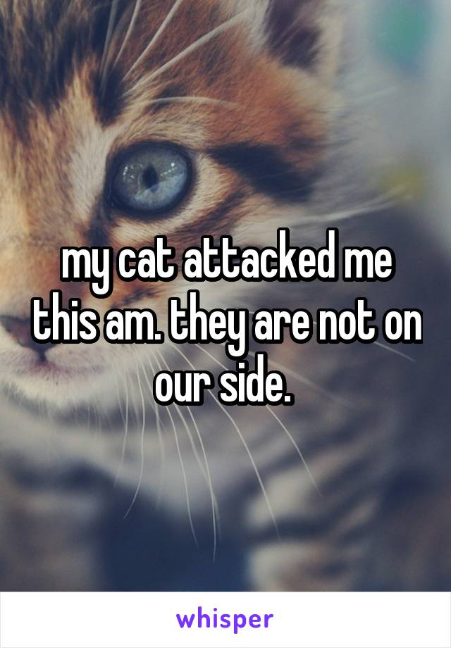 my cat attacked me this am. they are not on our side.