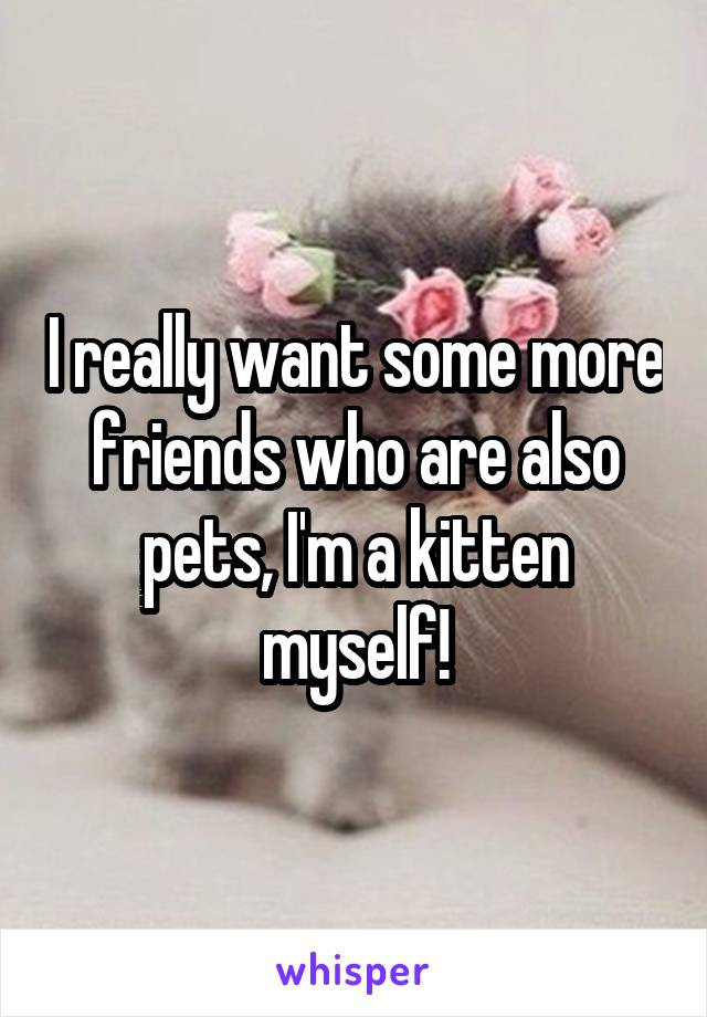I really want some more friends who are also pets, I'm a kitten myself!