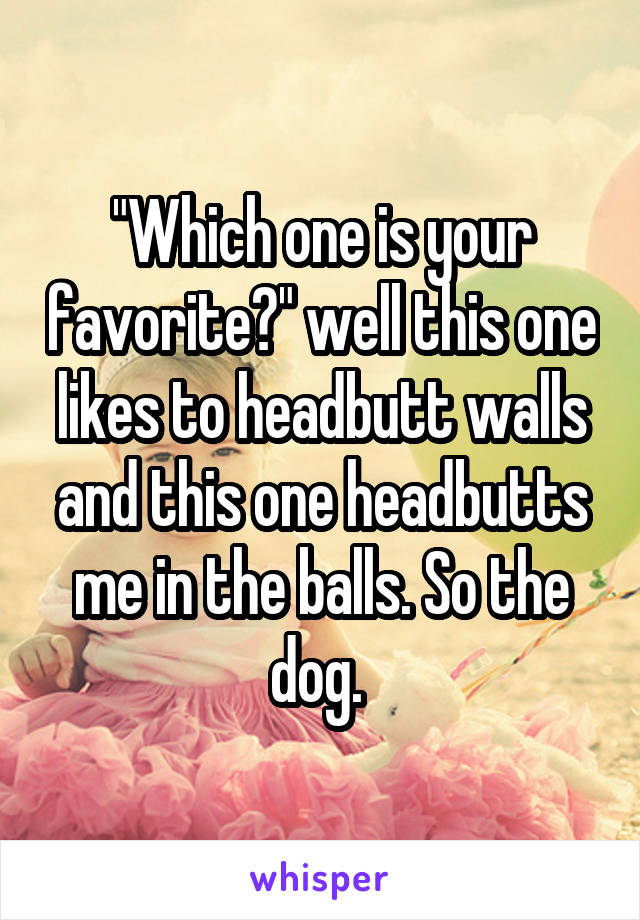 """""""Which one is your favorite?"""" well this one likes to headbutt walls and this one headbutts me in the balls. So the dog."""
