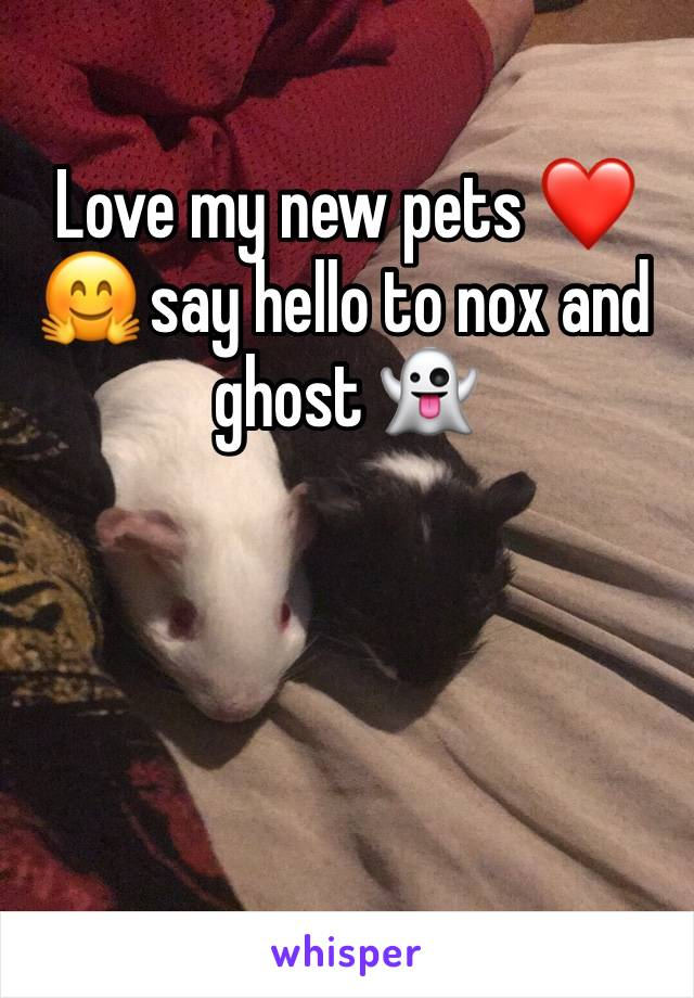 Love my new pets ❤️🤗 say hello to nox and ghost 👻
