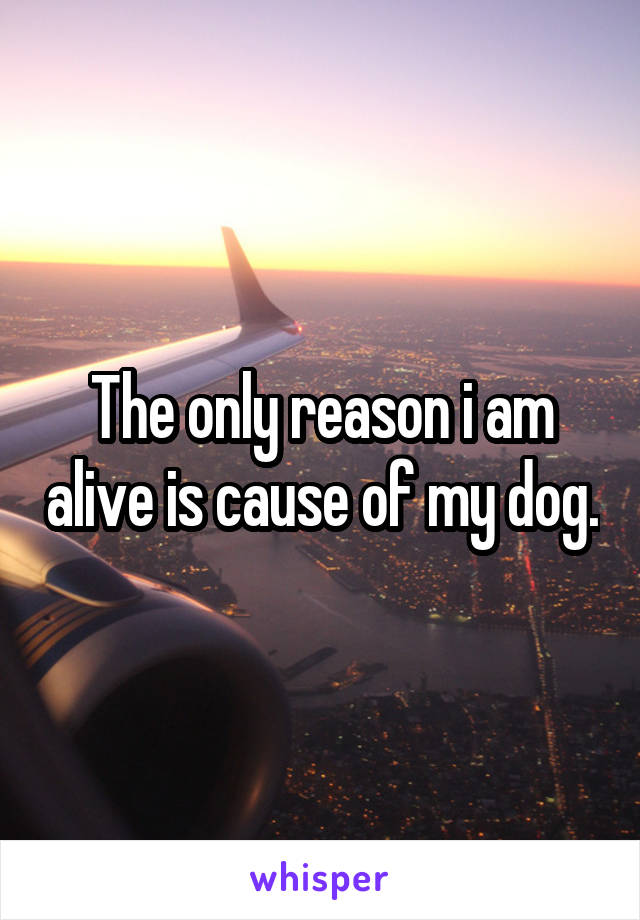 The only reason i am alive is cause of my dog.