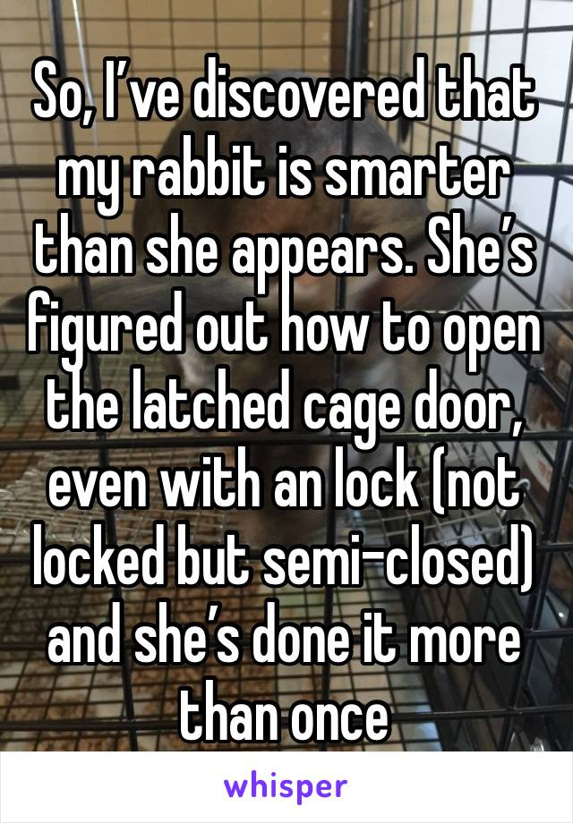 So, I've discovered that my rabbit is smarter than she appears. She's figured out how to open the latched cage door, even with an lock (not locked but semi-closed) and she's done it more than once