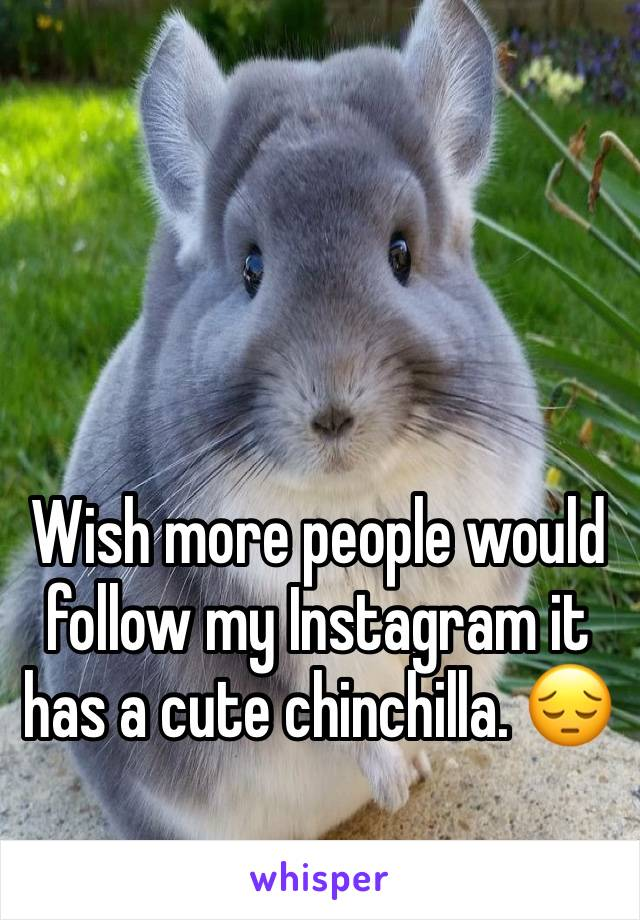 Wish more people would follow my Instagram it has a cute chinchilla. 😔