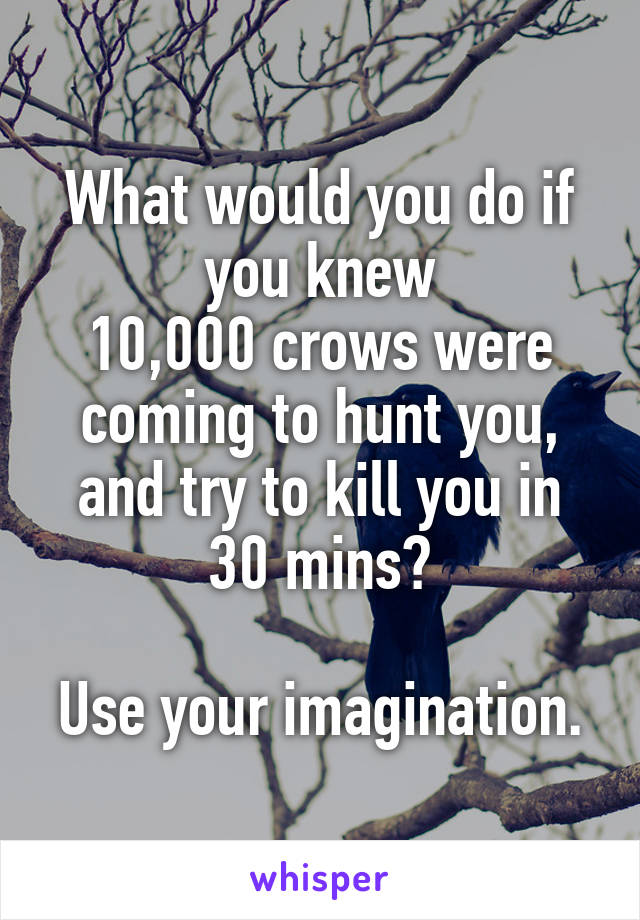 What would you do if you knew 10,000 crows were coming to hunt you, and try to kill you in 30 mins?  Use your imagination.