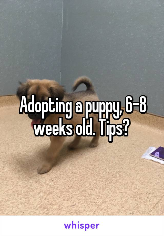 Adopting a puppy, 6-8 weeks old. Tips?