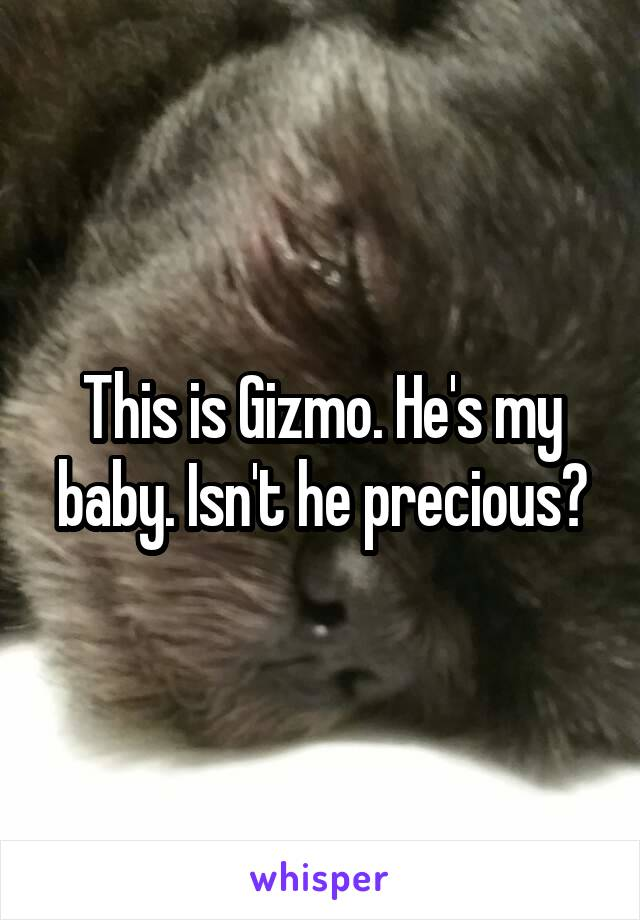 This is Gizmo. He's my baby. Isn't he precious?