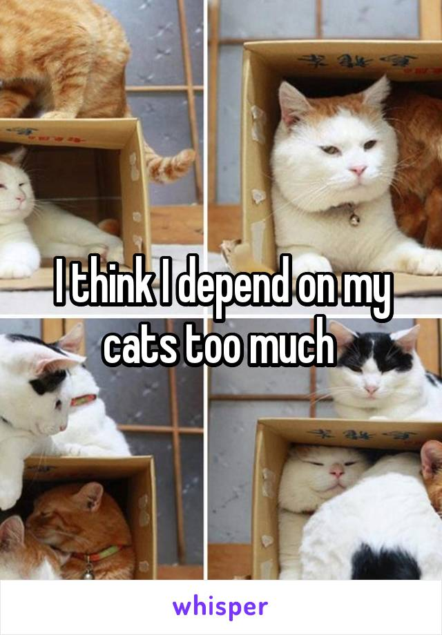 I think I depend on my cats too much