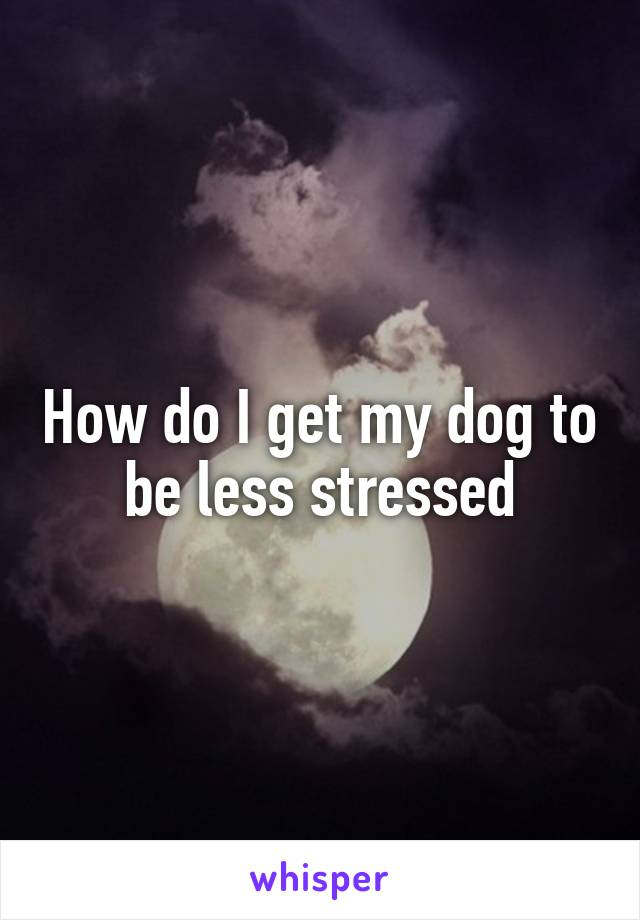 How do I get my dog to be less stressed