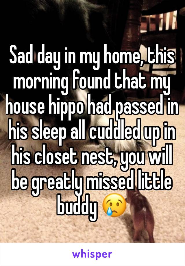Sad day in my home, this morning found that my house hippo had passed in his sleep all cuddled up in his closet nest, you will be greatly missed little buddy 😢