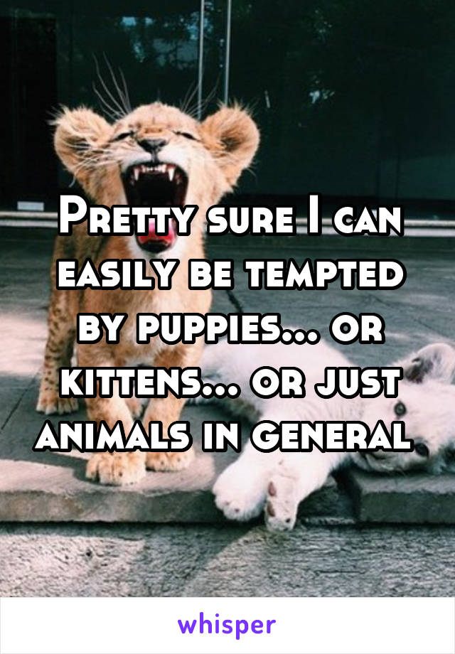 Pretty sure I can easily be tempted by puppies... or kittens... or just animals in general
