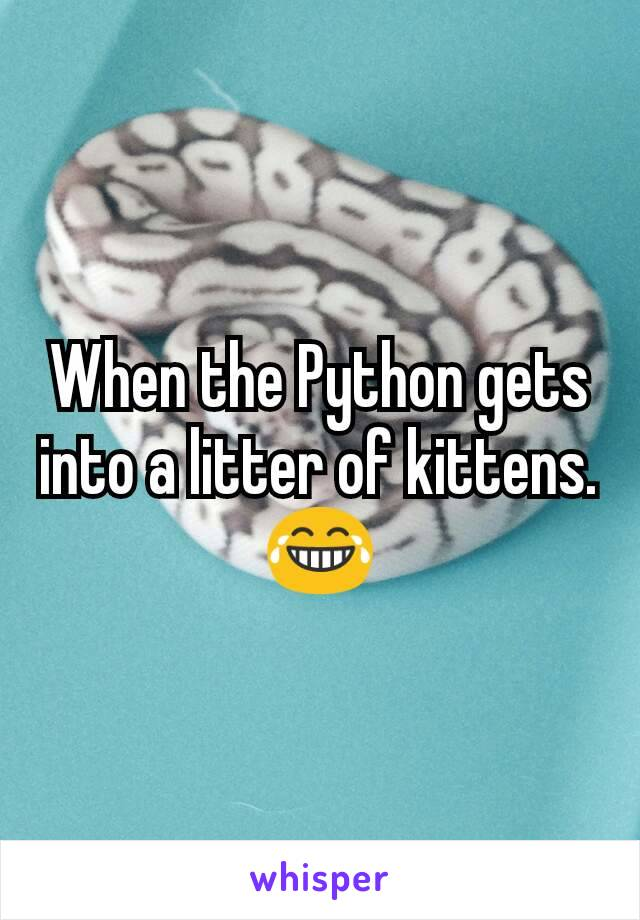 When the Python gets into a litter of kittens.😂