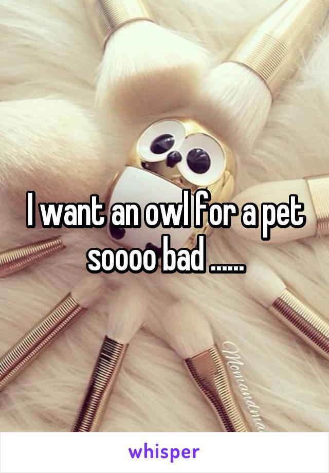 I want an owl for a pet soooo bad ......
