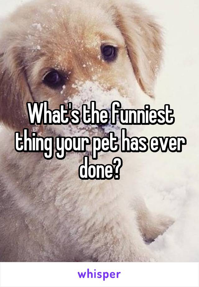 What's the funniest thing your pet has ever done?