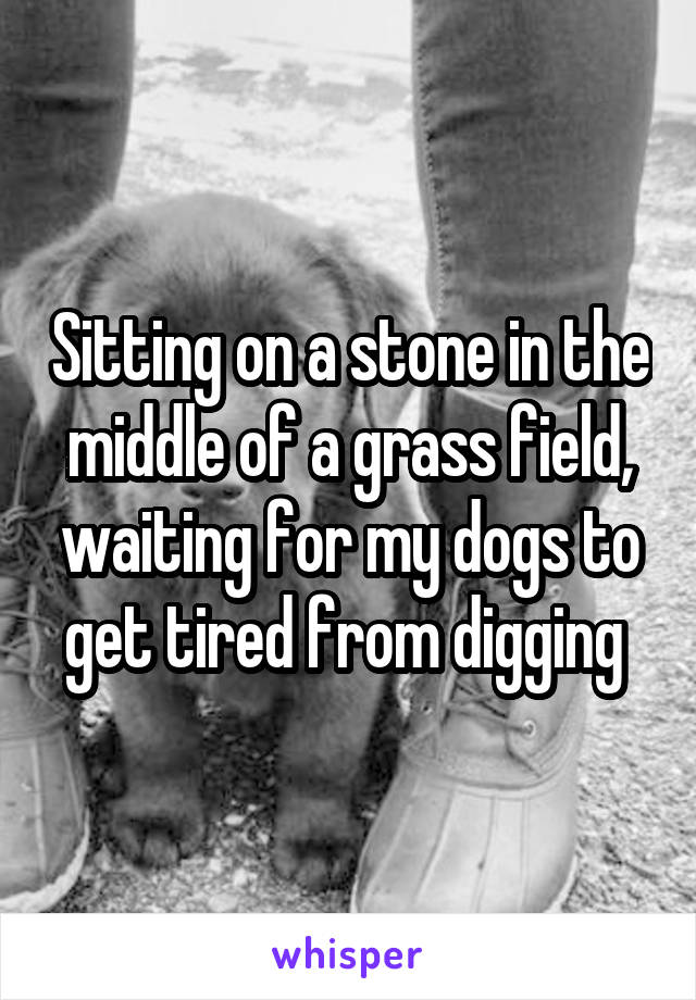Sitting on a stone in the middle of a grass field, waiting for my dogs to get tired from digging