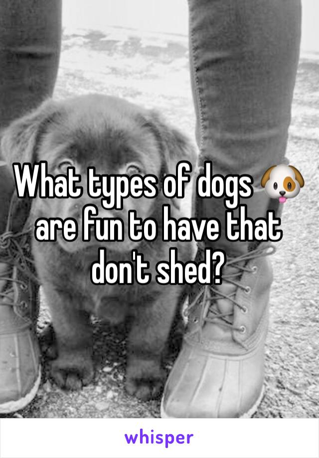 What types of dogs 🐶 are fun to have that don't shed?
