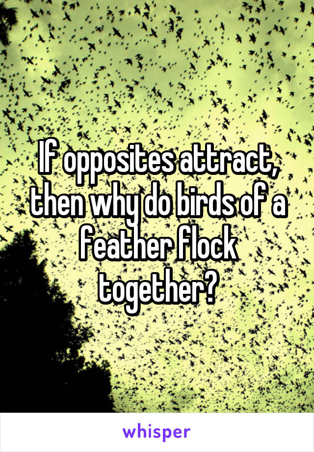 If opposites attract, then why do birds of a feather flock together?
